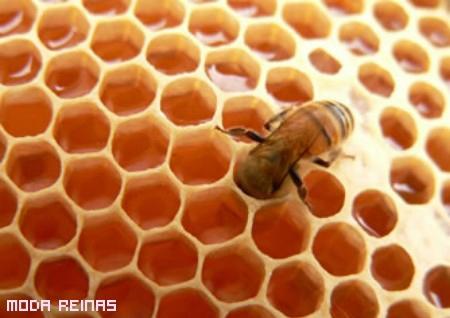 cera-de-abejas-en-recetas-caseras