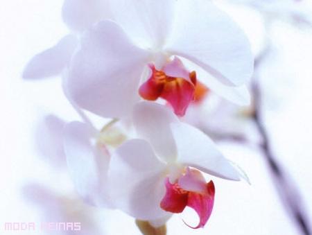 orquideas-moda-femenina-de-geisha